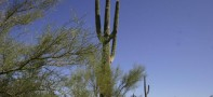 Buy Arizona Land In City of Maricopa And Mulitple Lots